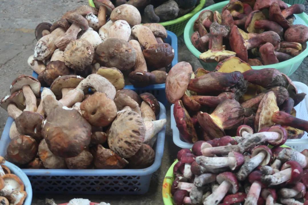 菌子季,我打飞的去全国最大的野生菌市场逛了逛